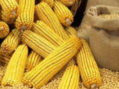кукуруза кукуруза кукуруза кукурузаку куруза
